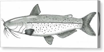 Channel Catfish Canvas Print by Glenn Strickland