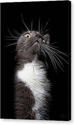 Charlie Boy Canvas Print by Derek Byrne