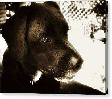 Charlie Canvas Print by Steve Buckenberger