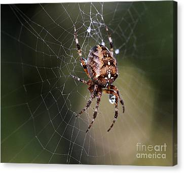 Charlottes Bigger Friend Canvas Print by Bob Christopher