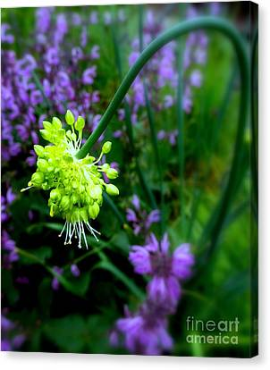 Chartreuse Canvas Print by Maria Scarfone