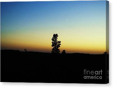 Canvas Print featuring the photograph Chasing The Sun by Julie Clements