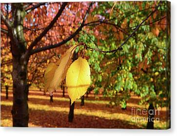 Canvas Print featuring the photograph Cheery Tree Sheet by Bruno Santoro