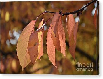 Canvas Print featuring the photograph Cheery Tree Sheets 1 by Bruno Santoro