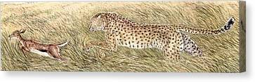 Cheetah And Gazelle Fawn Canvas Print by Tim McCarthy