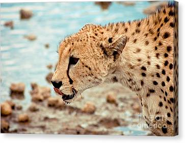 Cheetah Headshot Canvas Print