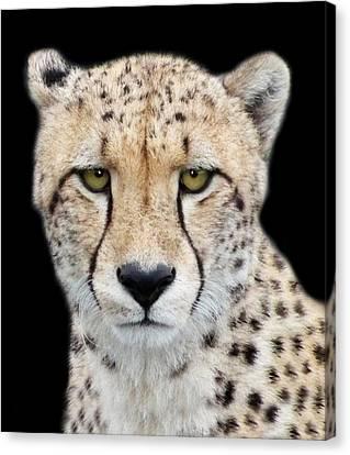 Canvas Print featuring the photograph Cheetah by Lynn Bolt