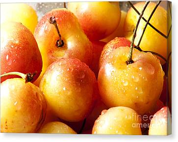 Cherries Canvas Print by Blink Images