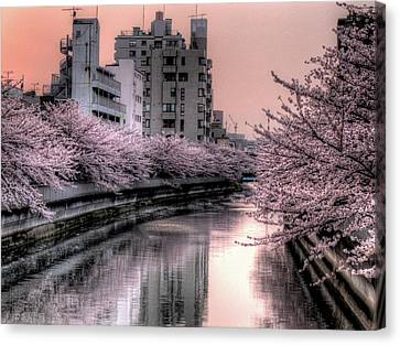 Cherry Blossom Canvas Print by Akirat2011, All Right Reserved.