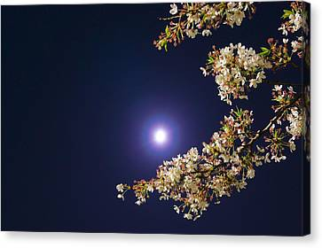 Cherry Blossoms Canvas Print by GLIDEi7