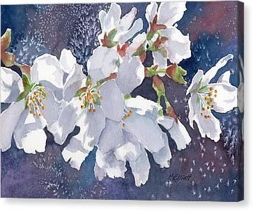 Cherry Blossoms Canvas Print by Marsha Elliott