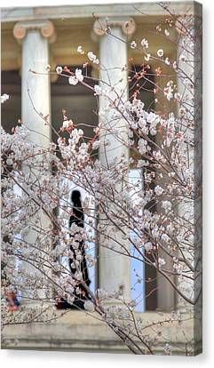 Thomas Jefferson Canvas Print - Cherry Blossoms Washington Dc 1 by Metro DC Photography