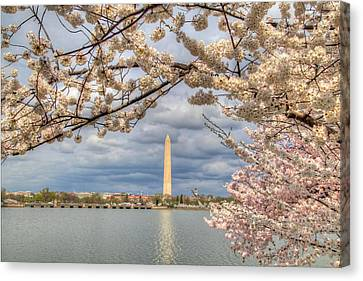 Cherry Blossoms Washington Dc 4 Canvas Print