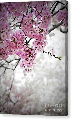 Cherry Dreams Canvas Print