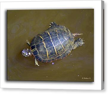 Chester River Turtle Canvas Print by Brian Wallace