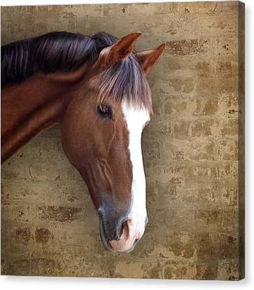 Chestnut Pony Portrait Canvas Print by Ethiriel  Photography