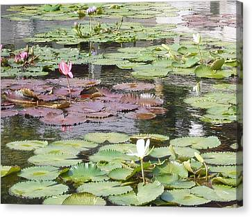 Bamboo House Canvas Print - Chi Lin Lily Pond by Chan K H