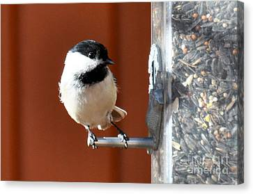 Canvas Print featuring the photograph Chickadee by Cheryl McClure