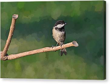 Chickadee On A Stick Canvas Print by Debbie Portwood