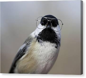 Chickadee Wearing Glasses Canvas Print by Www.sharp-photo.com