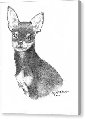 Canvas Print featuring the drawing Chihuahua by Jim Hubbard
