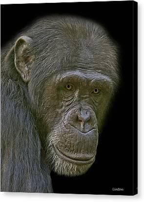 Chimpanzee Portrait Canvas Print by Larry Linton
