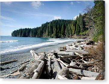 China Beach Canvas Print - China Beach Vancouver Island Juan De Fuca Provincial Park by Andy Smy
