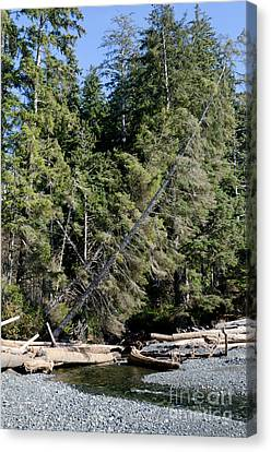 China Beach Canvas Print - China Creek China Beach Juan De Fuca Provincial Park Bc Canada by Andy Smy