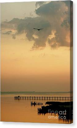 Canvas Print featuring the photograph Chincoteaque Island by Nicola Fiscarelli
