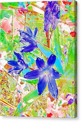 Chionodoxa Canvas Print by Barbara Moignard