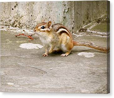 Chipmunk Scurry Canvas Print