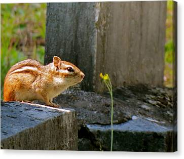 Chipmunk With Flower Canvas Print