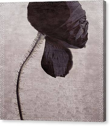 Chocolate Poppy Canvas Print by Bonnie Bruno