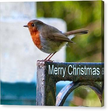 Christmas Robin Canvas Print by Debra Collins