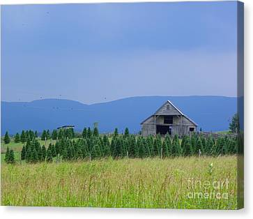 Canvas Print featuring the photograph Christmas Tree Farm by Eve Spring