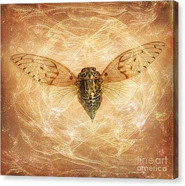 Cicada In Amber Canvas Print