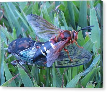 Cicada Killer Canvas Print by John Crothers