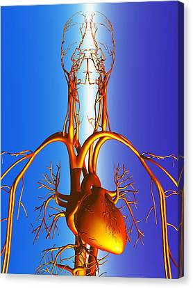 Circulatory System Canvas Print by Pasieka