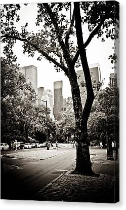City Contrast Canvas Print by Sara Frank
