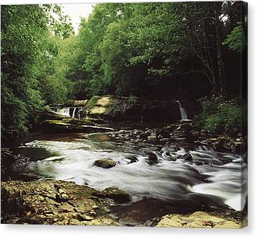 Co. Clare Canvas Print - Clare River, Clare Glens, Co Tipperary by The Irish Image Collection