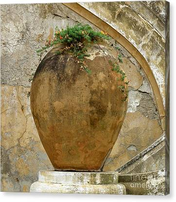 Canvas Print featuring the photograph Clay Pot by Lainie Wrightson