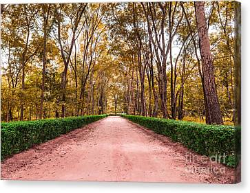 Clay Road In The National Park Canvas Print by Mongkol Chakritthakool