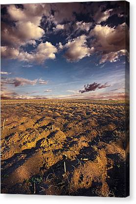 clean Dirt Canvas Print by Phil Koch