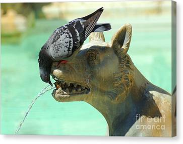 Using His Head Canvas Print by Bob Christopher