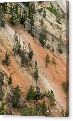 Cliff Side Grand Canyon Colors Vertical Canvas Print by Living Color Photography Lorraine Lynch