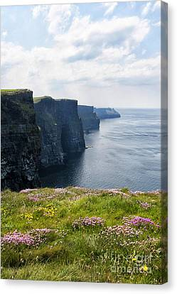 Cliffs Of Moher In Spring Canvas Print by Cheryl Davis
