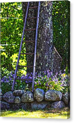 Canvas Print - Climb by Tanya Chesnell