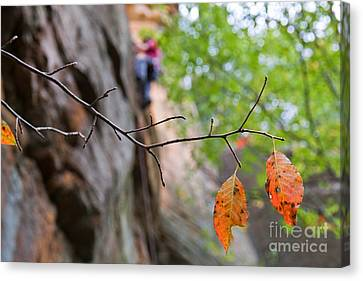 Climber In Fall Canvas Print