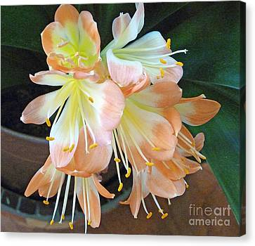 Clivia Canvas Print by Louise Peardon