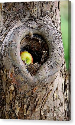 Close To The Heart Canvas Print by Vicki Pelham